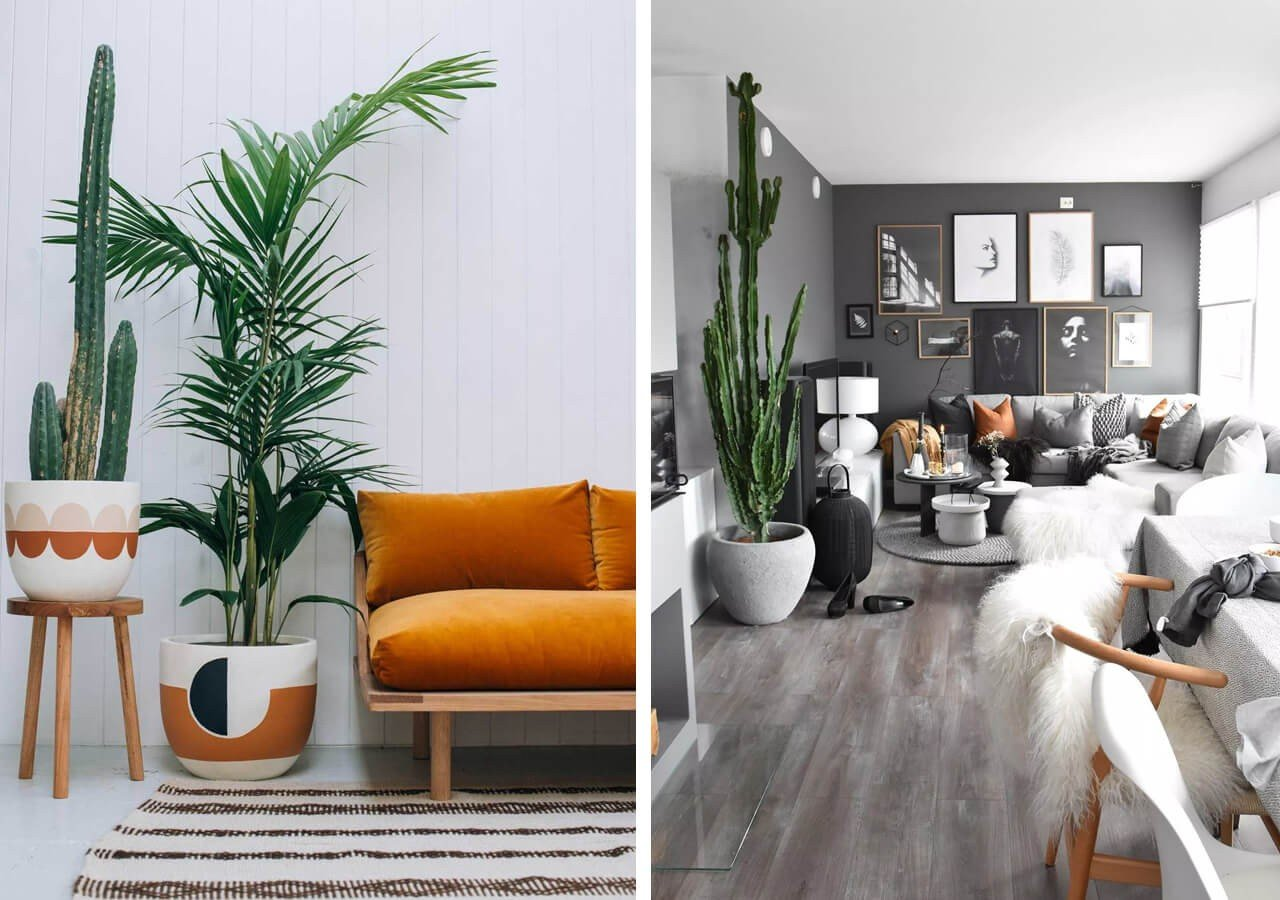 Plantas Decoração de Sala