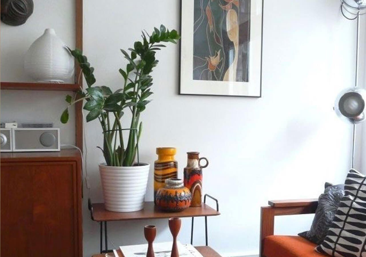 Zamioculca Zamiifolia