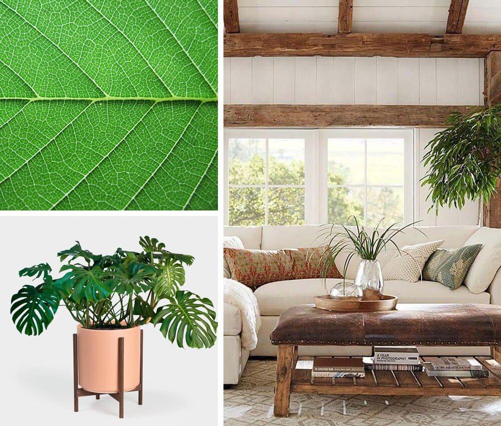 Plantas Decoração Rústica