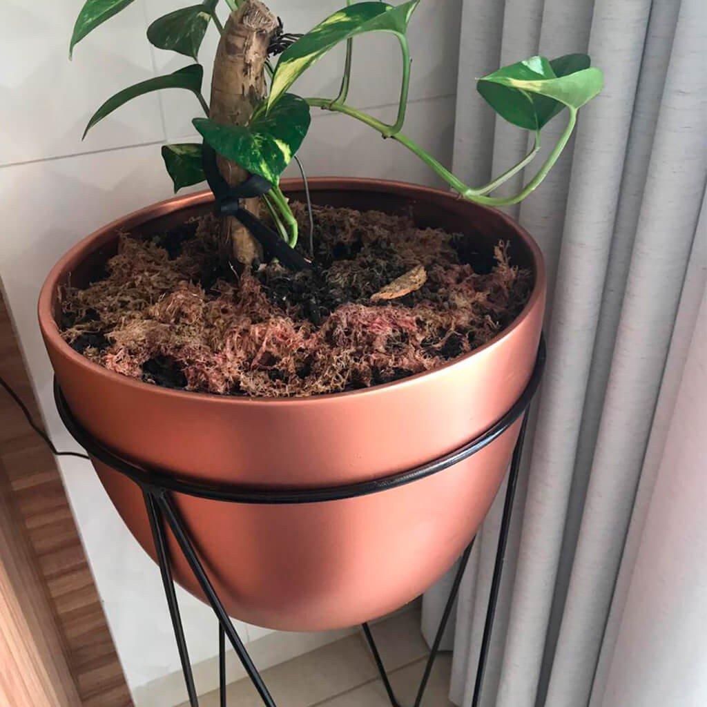 Plantas Vasos Decorativos